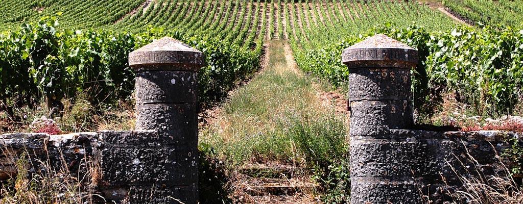 Vignoble du Coteaux Bourguignons