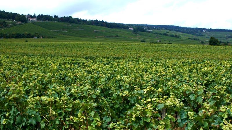 Bienvenue sur Coteaux-Bourguignons.com