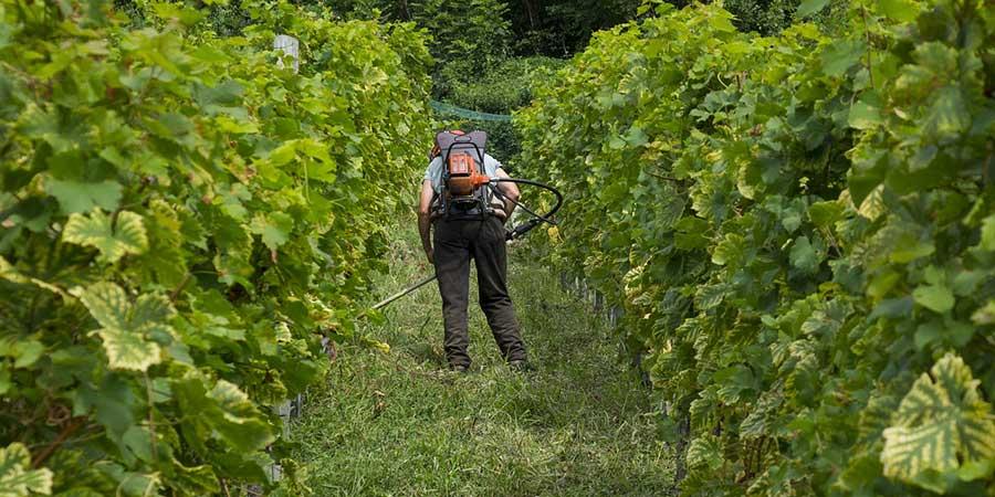 Vignerons de bourgogne